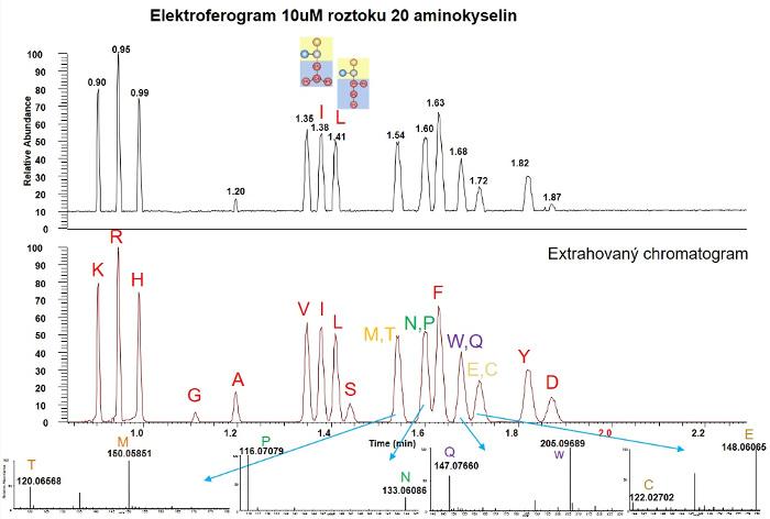 Obr. 5: Elektroforegram 20 aminokyslin, 2-minutová analýza s HRMS identifikací.