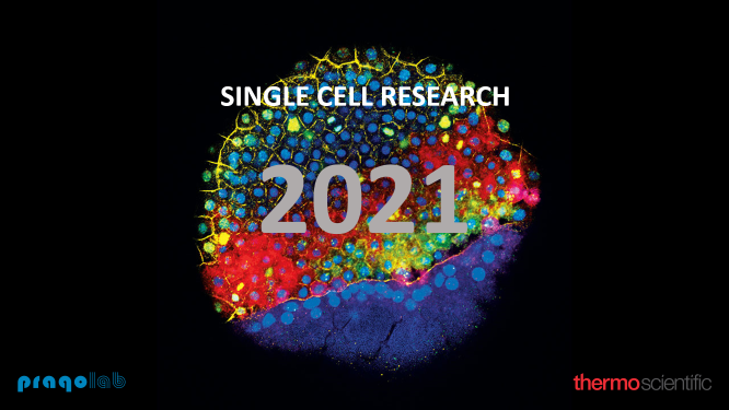 Single%20cell%20web_Obr.png