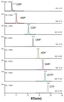 Obr. 4: IC separace nukleotidů s MS/MS detekcí.