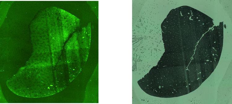 Obr. 10: Fluorescenční (vlevo) a bright field mikroskopické obrázky tenkých řezů jater krysy pro analýzy v módu KED (vlevo) a v TQ-O 2 módu.