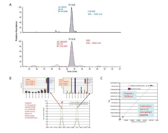 Obr. 3 – Porovnanie hodnoty signál/šum (S/N) v prípade full-scan a WiSIM-DIA usporiadania (A), výsledok databázového skríningu fragmentačných spektier 8 nejintenzívnejších iónov peptidu E.coli, pík v 16. min je kontaminant (B), kalibračná krivka jedného zo 14 izotopovo značených peptidov pridaných do matrice E.coli (C).
