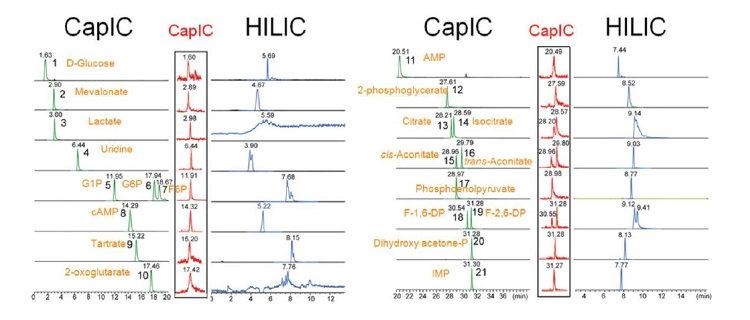 Obr. 2: Výsledky stanovení standardů 21 polárních metabolitů na hladinách 600 ppb a 60 ppt za použití HPIC-HRAM instrumentace (vlevo a uprostřed) a na hladině 600 ppb za použití HILIC-HRAM (vpravo).