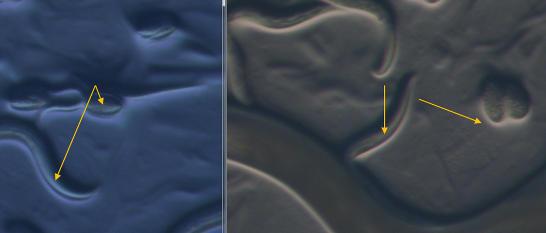 Zobrazení filtrů. Vlevo s filtrem a vpravo bez filtru.Žluté šipky označují zajímavé oblasti.