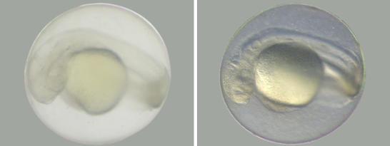Zobrazení kontrastu. Vlevo bez rottermanova kontrastu a vpravo s rottaermanovým kontrastem.