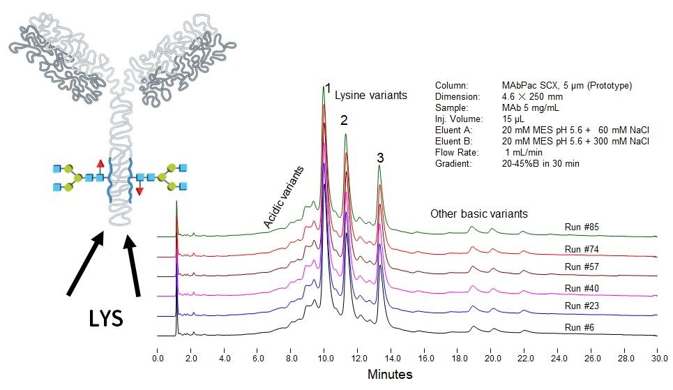 Chromatografická separácia finálnej monoklonálnej protilátky na iónomeniči, odhaľujúca prítomnosť nábojových variantov
